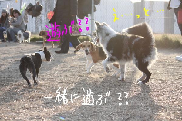 ponzu97 028_edited-1