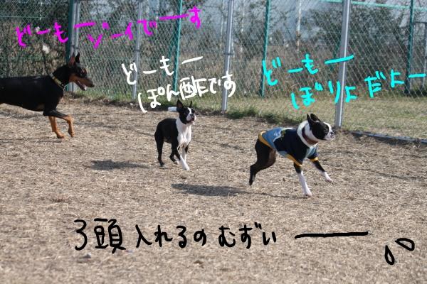 ponzu115 006_edited-1