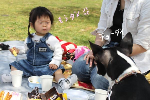 hanami 099_edited-1