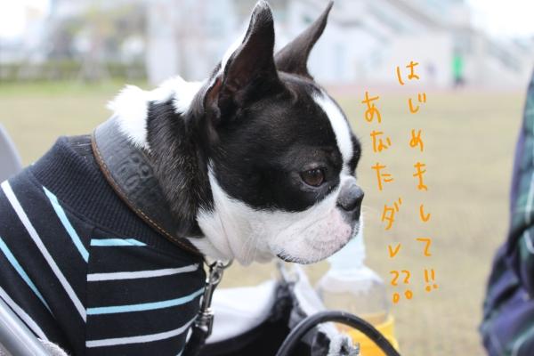 ponzu 関東1 036_edited-1