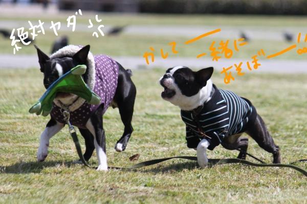 ponzu 関東1 057_edited-1