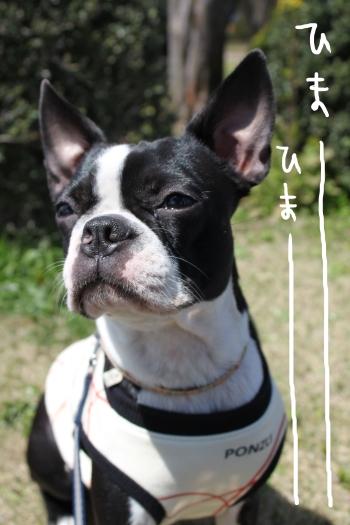 ponzu 関東1 220_edited-1