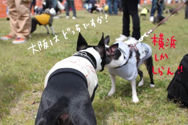 ponzu 関東1 247_edited-1