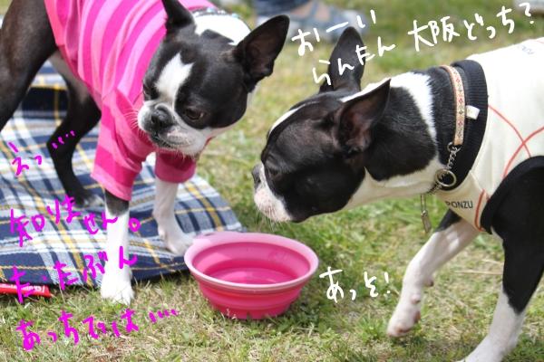 ponzu 関東1 259_edited-1