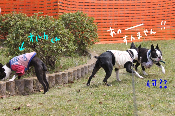 ponzu 関東1 239_edited-1