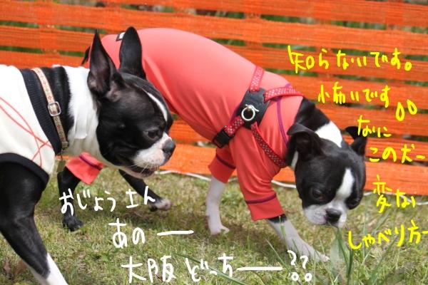ponzu 関東1 272_edited-1