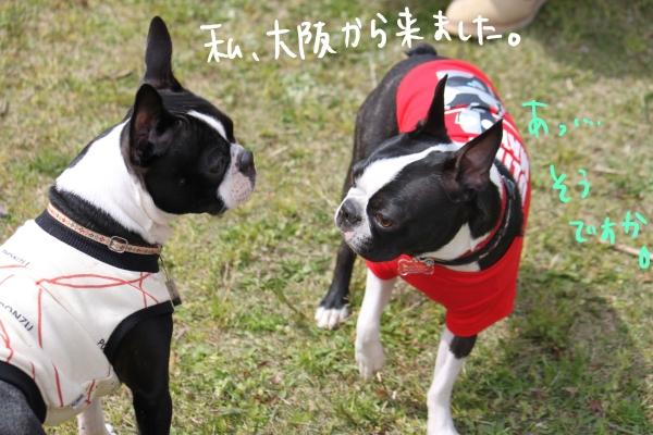 ponzu 関東1 346_edited-1