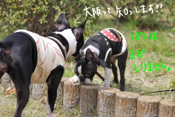 ponzu 関東1 352_edited-1