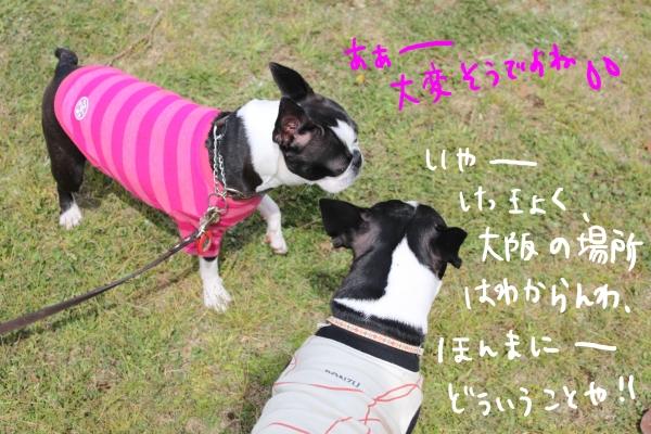 ponzu 関東1 394_edited-1