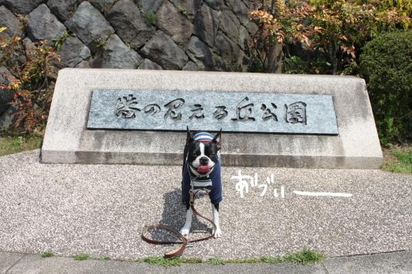 ponzu 関東1 549_edited-1