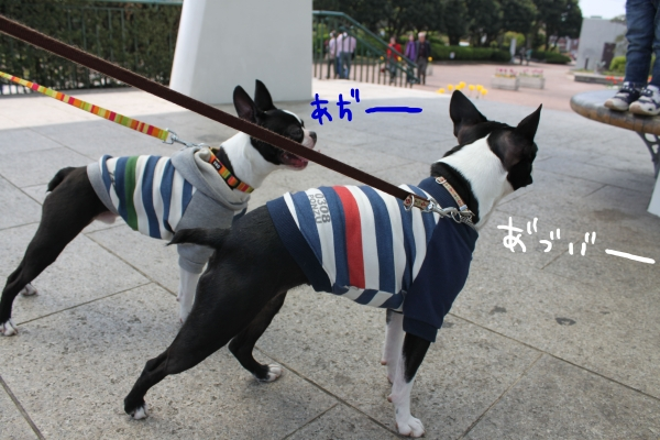 ponzu 関東1 530_edited-1