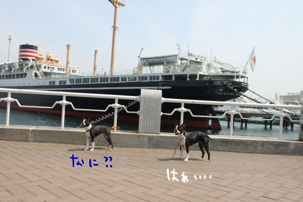ponzu 関東1 567_edited-1