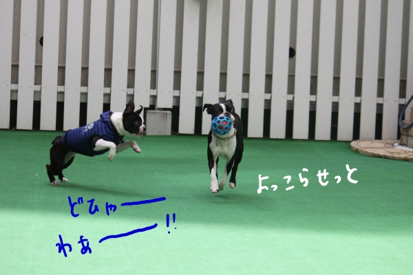 ponzu 関東2 050_edited-1