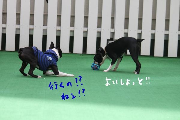 ponzu 関東2 047_edited-1