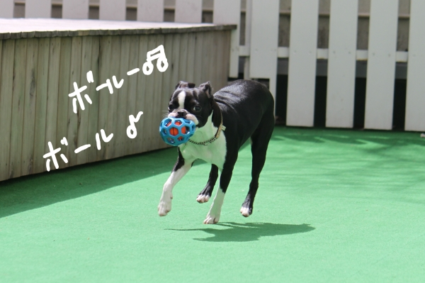 ponzu 関東2 014_edited-1