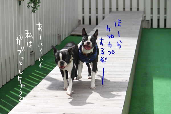 ponzu 関東2 089_edited-1