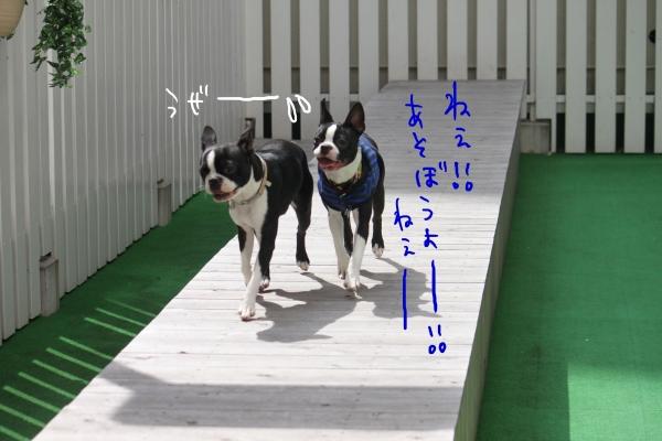 ponzu 関東2 088_edited-1