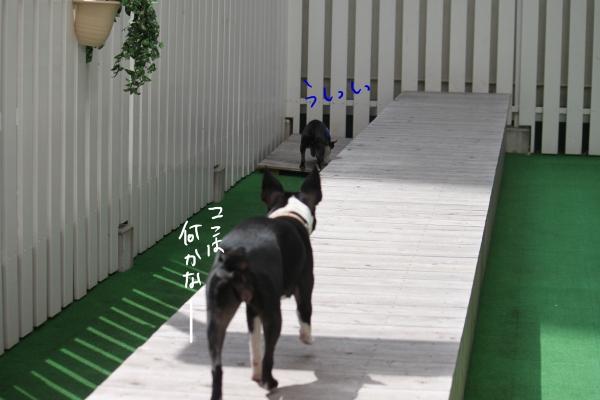 ponzu 関東2 082_edited-1