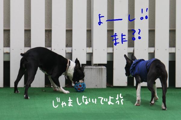 ponzu 関東2 062_edited-1