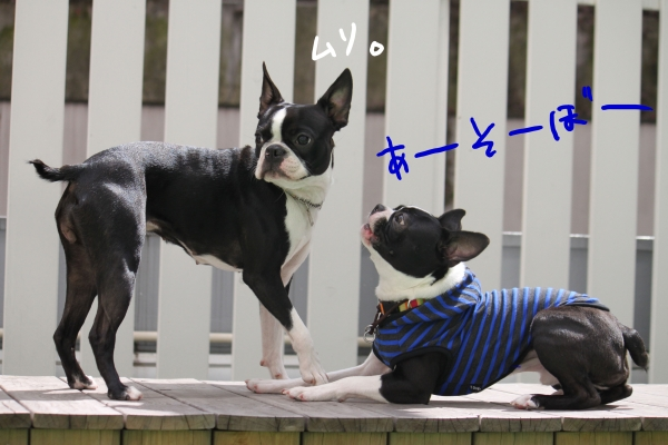 ponzu 関東2 115_edited-1