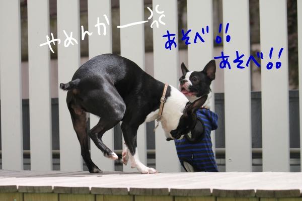 ponzu 関東2 117_edited-1