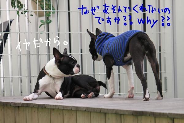 ponzu 関東2 106_edited-1