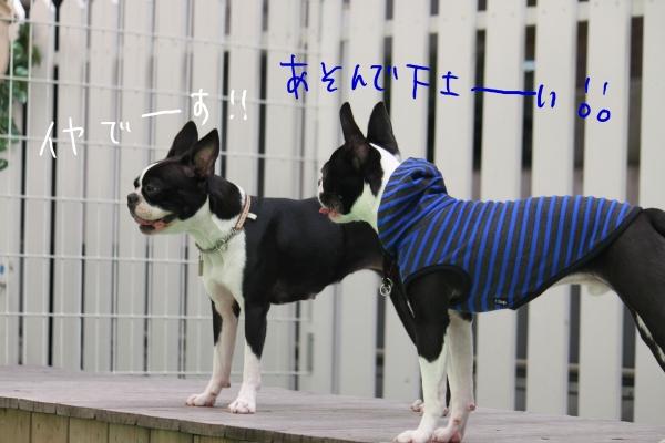 ponzu 関東2 097_edited-1