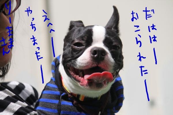 ponzu 関東2 160_edited-1