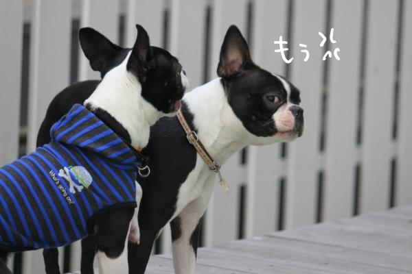 ponzu 関東2 145_edited-1