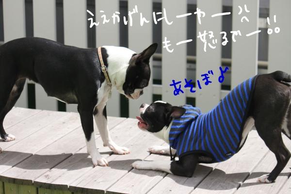 ponzu 関東2 157_edited-1