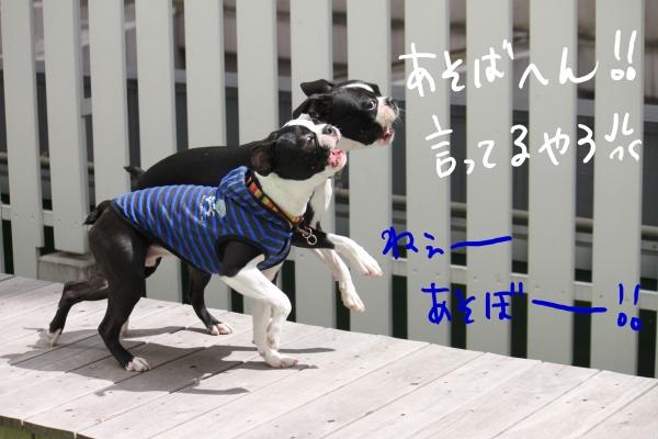 ponzu 関東2 133_edited-1