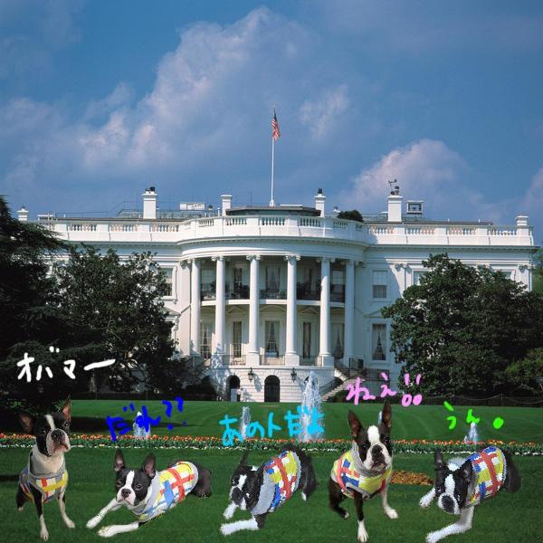 ホワイトハウス_edited-1
