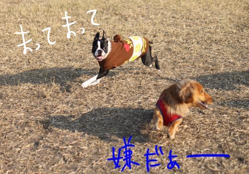 PONZU84+266_edited-1_convert_20091201183439.jpg