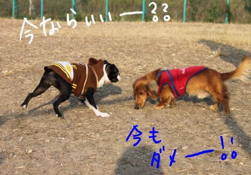 PONZU84+315_edited-1_convert_20091201184049.jpg