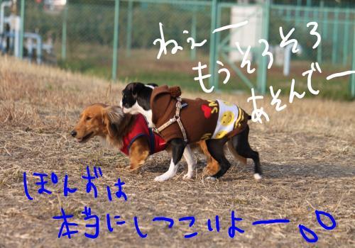 PONZU84+344_edited-1_convert_20091201184308.jpg