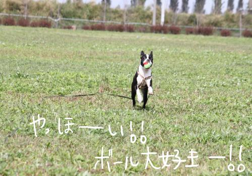ponzu62+007_edited-1_convert_20091020150040.jpg