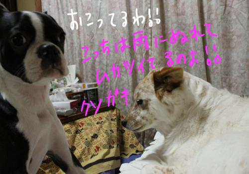 ponzu65+052_edited-1_convert_20091026120736.jpg