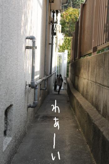 ponzu67+009_edited-1_convert_20091029071800.jpg