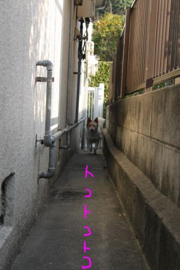 ponzu67+013_edited-1_convert_20091029072156.jpg