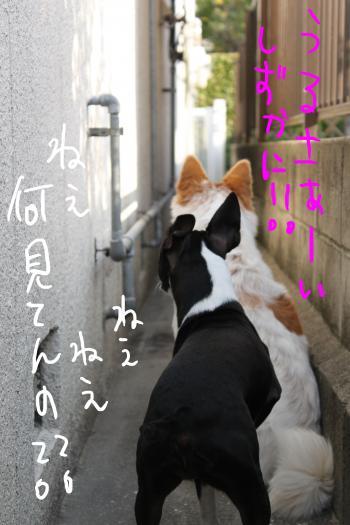 ponzu67+018_edited-1_convert_20091029072440.jpg