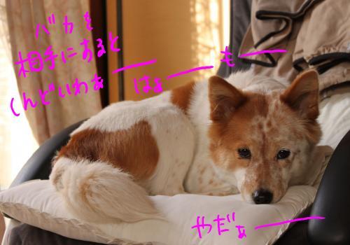 ponzu67+022_edited-1_convert_20091029114020.jpg