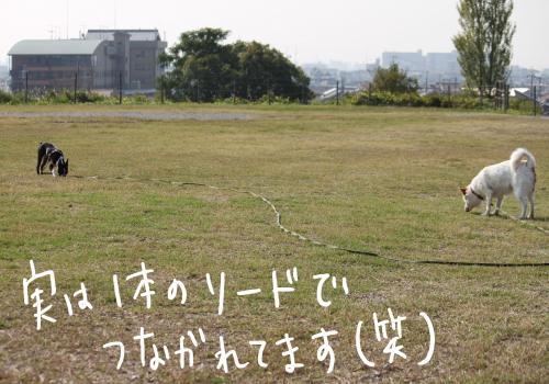 ponzu67+045_edited-1_convert_20091028164501.jpg