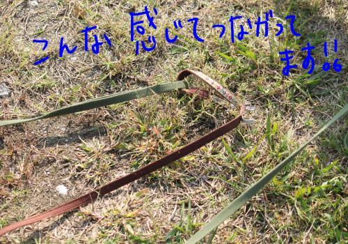 ponzu67+064_edited-1_convert_20091028164956.jpg