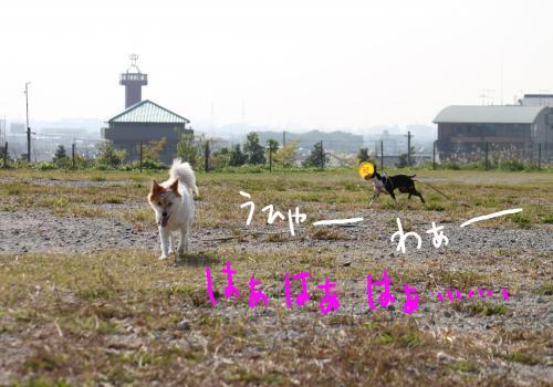 ponzu67+074_edited-1_convert_20091028165729.jpg