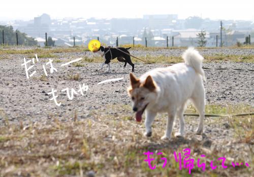 ponzu67+081_edited-1_convert_20091028170223.jpg