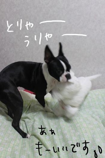 ponzu74+039_edited-1_convert_20091112182222.jpg