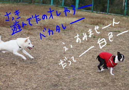 ponzu77+183_edited-1_convert_20091113170422.jpg