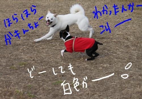ponzu77+194_edited-1_convert_20091113170502.jpg