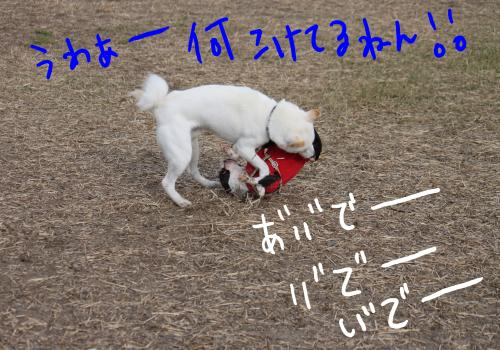 ponzu77+199_edited-1_convert_20091113170544.jpg
