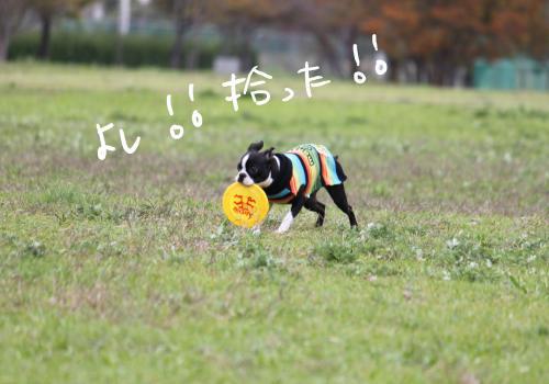 ponzu78+004_edited-1_convert_20091117175649.jpg